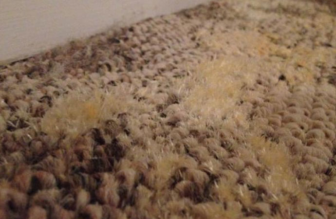 Germy Carpet